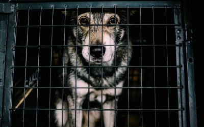 Our Animal Shelter Laws Need to Change